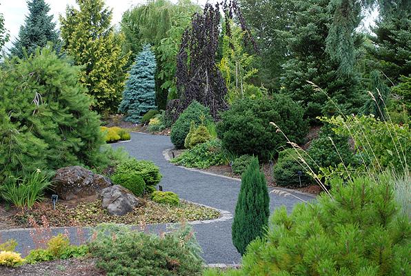 Abies concolor 'Blue Cloak' | Landscape Plants | Oregon ... - photo #31