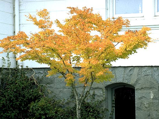 Plant Habit Fall