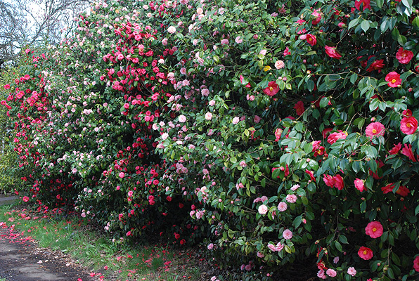 Bushes That Bloom In Spring