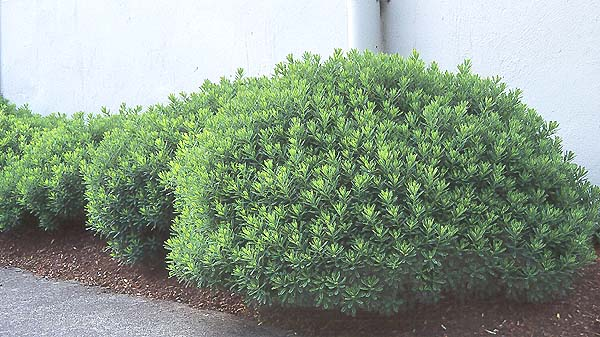 Plant Habit After Flowering