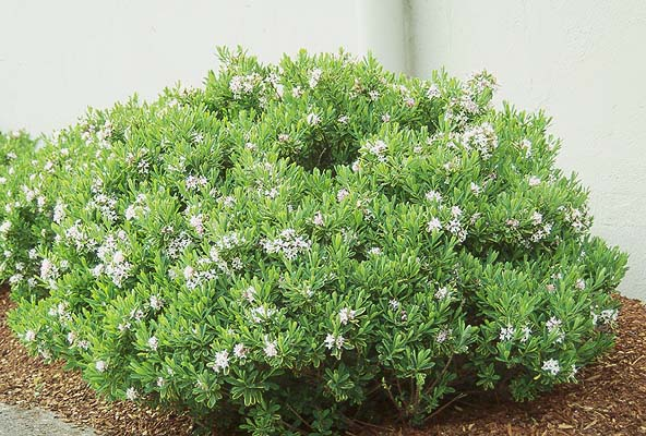 Plant Habit Flowering