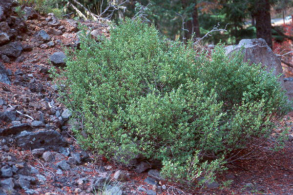 plant habit, in forest