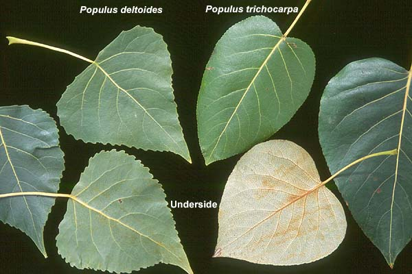 """falling leaves and bossypants comparison and Out of the blue and falling leaves compare and conrast conflict daisy and callum 1 """"out of the blue"""" """"falling leaves"""" callum murray daisy waller 2 """"out of the blue """" and its use of sensory language out of the blue uses sensory language to provoke imagery and emotions in the reader """"that a white cotton."""