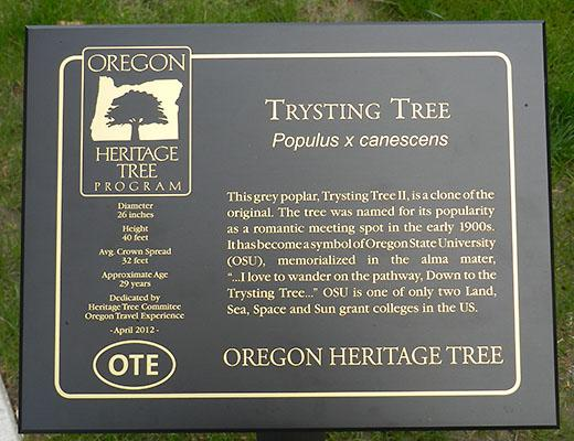 Plaque designating the Trysting Tree as a Oregon Heritage Tree