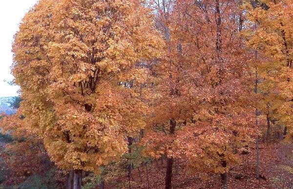 in habitat, late fall in New York state