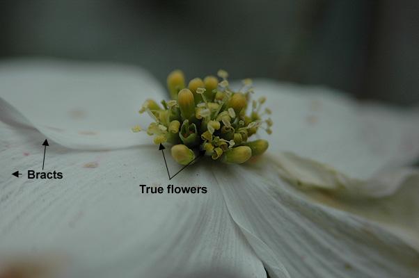 true flowers