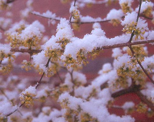 snow and flowers