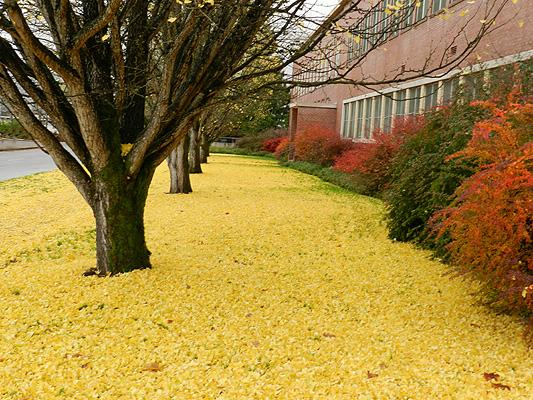 carpet of fallen leaves under a row of trees