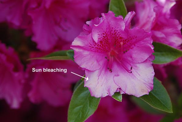 flower under bright sunlight