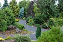 in the Oregon Garden