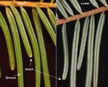 needles, upper and lower