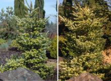 plant habit, spring and fall