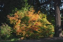 plant habit, fall, in landscape