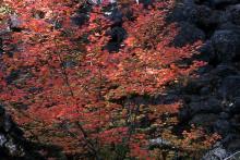 plant habit, fall, in habitat