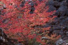 plant habit, fall, in woods