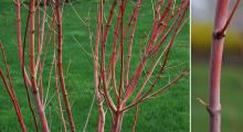 branches and bark, spring