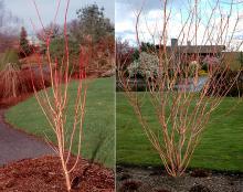 plant habit, winter/spring