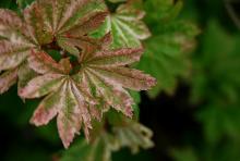 leaves, summer