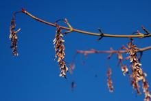 fruit clusters, winter