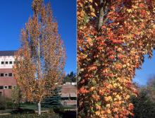 plant habit and foliage, fall
