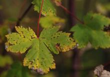 leaf,fall