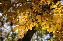 foliage, fall