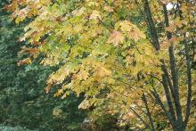 leaves, fall