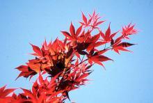 leafy shoot, spring