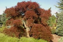 large plant, summer