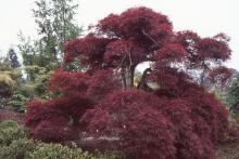 plant habit, large plant, spring