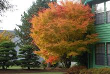 plant habit, fall, older tree