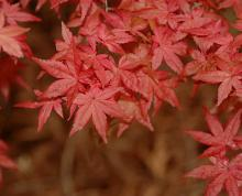 leaves, spring