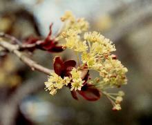 flower cluster, spring