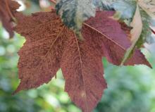 leaf, underside