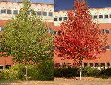 plant habit, summer and fall