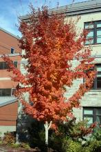 plant habit. fall