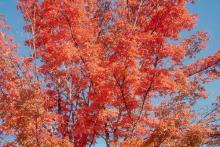 canopy, fall