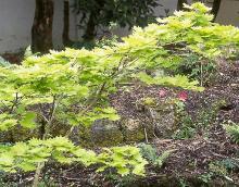 major branch, spring