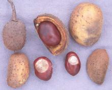 fruit and seeds, fall