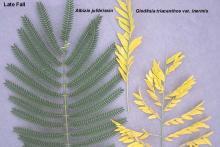 leaf, comparison, fall