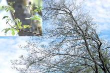 plant habit, late spring