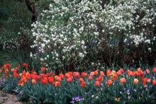 plant habit, flowering in spring