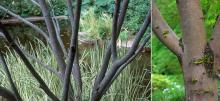 bark, shrub and tree forms