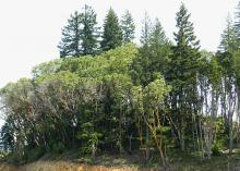a stand in a western Oregon forest