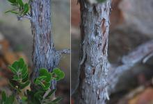 branch, trunk, bark