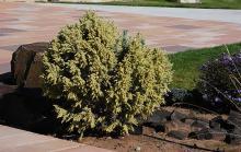plant habit, in a landscape, fall