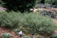 plant habit, in a garden