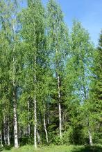 in habitat, Russia