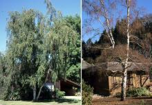plant habit, summer and winter