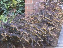several plants, spring flowering